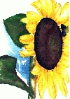 Sunflower 3 -Lutz Erler-