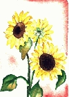 Sunflower 4 -Lutz Erler-