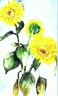 Sunflower 1 -Lutz Erler-