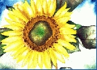 Sunflower 5 -Lutz Erler-