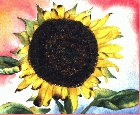 Sunflower 7 -Lutz Erler-