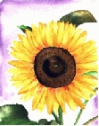 Sunflower 8 -Lutz Erler-