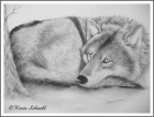 Resting Wolf